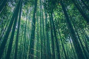 Deep Bamboo Forest