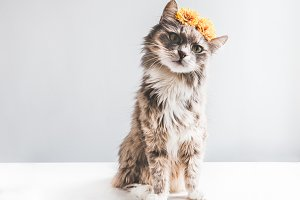 Charming, fluffy kitten with yellow