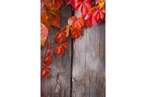 Autumn abstract frame. Fence and