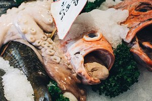 Fish head close up