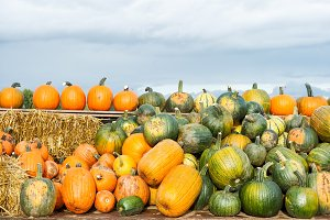 Pumpkin harvest Autumn nature