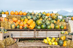 Pumpkin harvest Autumn nature landsc