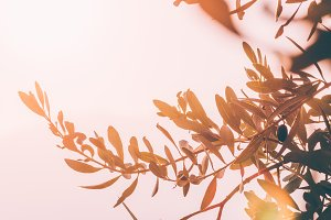Warm Autumnal Background with Olives