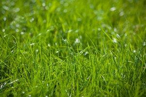 Closeup of green grass on blurred