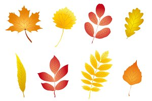 Colorful and nice autumn leaves set