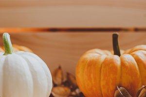 Autumn orange and white pumpkins