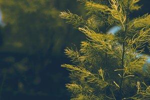 Fine Plant