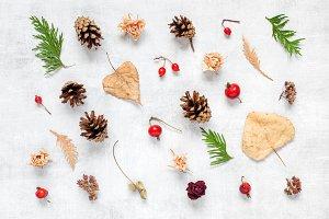 Pattern of autumn plants