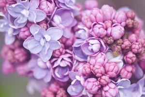 Pink and Purple Floral Bouquet