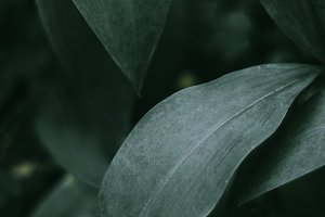 Leaves of a green forest plant