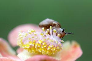 snails, snails above flowers