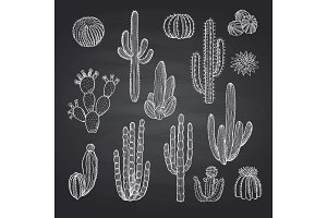 Vector cacti plants set on