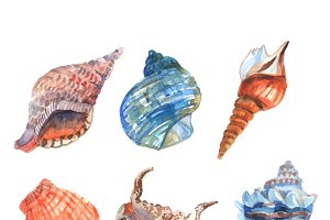 Watercolor shell decorative icons