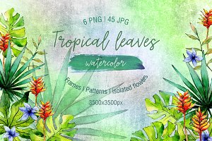 Green tropical leaves PNG watercolor
