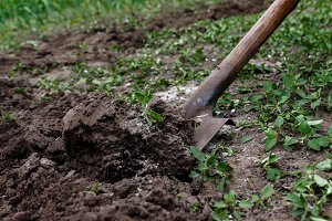 A woman's hand digs soil and soil wi