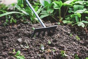 On the soil lie the garden rake. Clo
