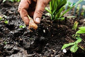 Women's hand sadi in soil-soil flowe