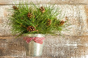 Pine branches with cones in zinc buc