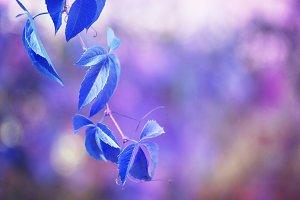 blue leaf branch