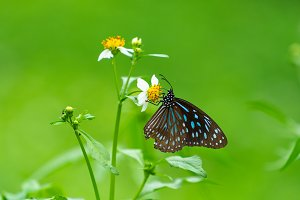 Butterfly looking for nectar