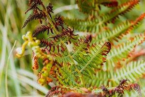 Leaves of fern half-wilted