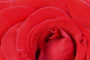 Red rose (macro)