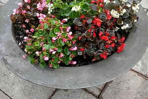 Round metal planter with flowers