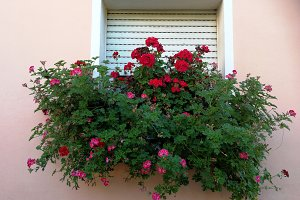 Windows with flowers on planter