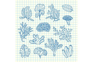 Vector hand drawn seaweed set
