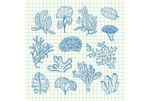 Vector hand drawn seaweed set