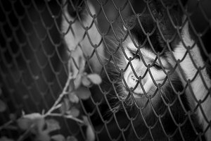 Life in cage concept. Sad Red-shanke