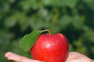 Red apple in hand outdoors on green