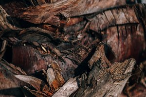 Brown Tropical Tree Bark