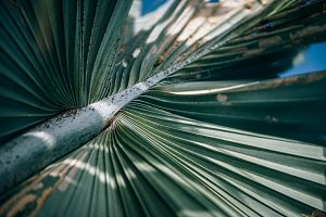 Faded Green Palm Branch at The Beach