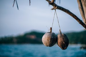 Two Coconuts Hanging in Low Light