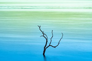 dry tree in the lake.