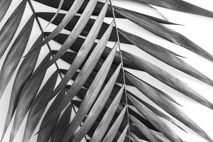 Palm leave background
