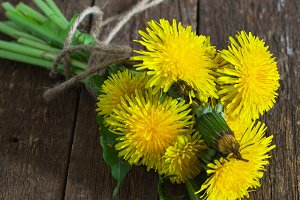 Yellow Dandelion on a wooden background
