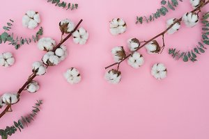 Cotton flowers with eucaliptus