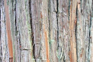 REAL Japanese Cedar Bark Texture