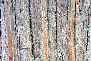 REAL Japanese Cedar Bark Texture