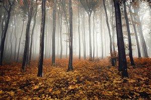 Autumn forest with orange leaves