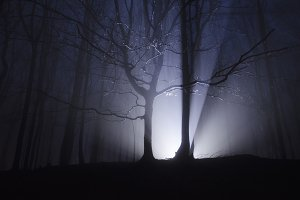 Dark forest night