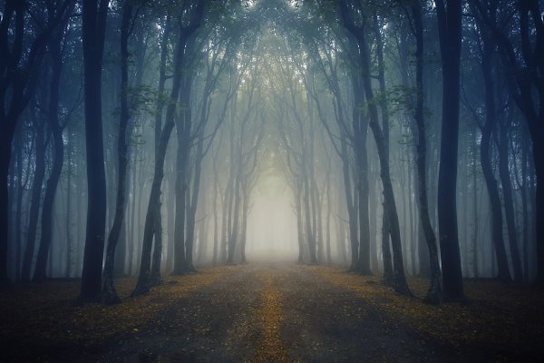 Surreal autumn forest path