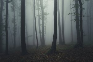 Mysterious dark foggy forest