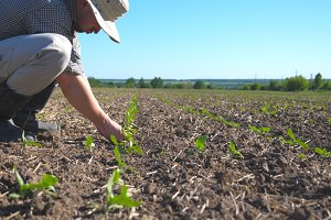 Angry farmer examining dry soil on