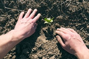 Male hands of farmer planting green