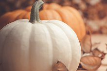Autumn orange and white pumpkins by  in Holidays