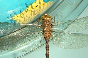 Dragonfly on world globe
