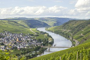 River Mosel and vineyards
